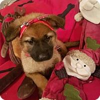 Adopt A Pet :: Redda - Detroit, MI