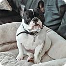 Adopt A Pet :: Mochi-ADOPTION PENDING!!