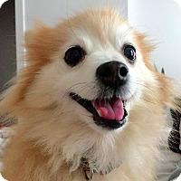Adopt A Pet :: Sasha! - New York, NY