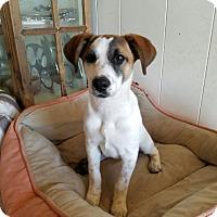 Adopt A Pet :: LW - Brunswick, ME