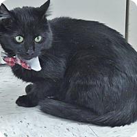 Adopt A Pet :: Cole - Chambersburg, PA
