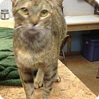 Adopt A Pet :: Tabitha - Monroe, GA