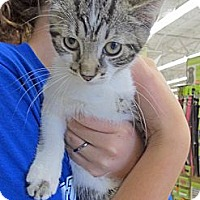 Adopt A Pet :: Momo - Riverhead, NY