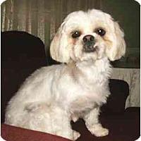 Adopt A Pet :: Jessie - Mooy, AL