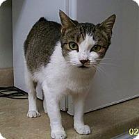 Adopt A Pet :: Matilda - Dover, OH