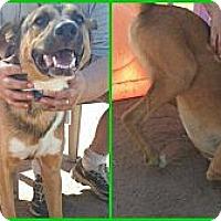 Adopt A Pet :: Jude - Scottsdale, AZ
