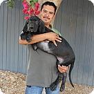 Adopt A Pet :: Hercules