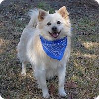Adopt A Pet :: Halo - Mocksville, NC