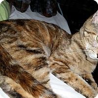Adopt A Pet :: Paise - Addison, IL