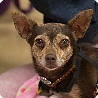 Adopt A Pet :: Luna - Grass Valley, CA