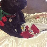Adopt A Pet :: Babs - Homewood, AL