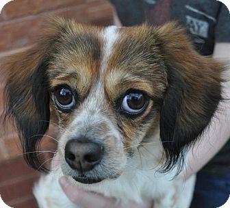 Small Dog Rescue Atlanta