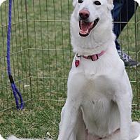 Adopt A Pet :: Bianca - Henderson, NV