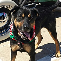 Adopt A Pet :: Trick - Terrell, TX