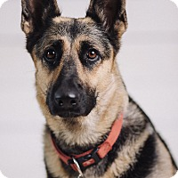 Adopt A Pet :: Roxy - Portland, OR