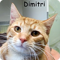 Adopt A Pet :: Dimitri - Warren, PA
