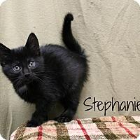 Adopt A Pet :: Stephanie - Melbourne, KY