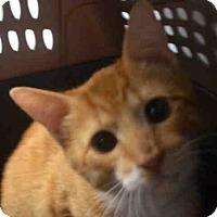 Adopt A Pet :: BEDFORD - Brooklyn, NY
