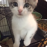 Adopt A Pet :: Alan - Forest Hills, NY