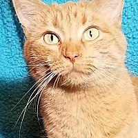 Adopt A Pet :: Piper - Colfax, IA