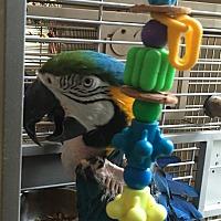 Adopt A Pet :: Rocco - Punta Gorda, FL