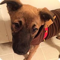 Adopt A Pet :: Zander - Smithfield, NC