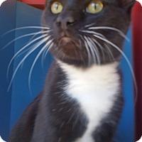 Adopt A Pet :: BOOTS - Ocala, FL