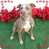 Adopt A Pet :: CANDY- avail 12/10 - Marietta, GA