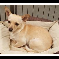 Adopt A Pet :: JOSIE - Winchester, CA