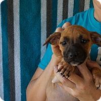 Adopt A Pet :: Andorra - Oviedo, FL