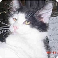 Adopt A Pet :: Tarzan - Pendleton, OR