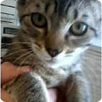 Adopt A Pet :: Flora - Jacksonville, FL