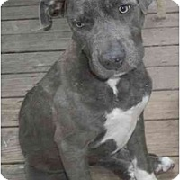 Adopt A Pet :: Mama - Roseville, MI