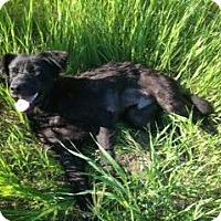 Adopt A Pet :: Carlyle - Saskatoon, SK