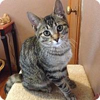 Adopt A Pet :: Starsky - St. Louis, MO