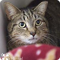 Adopt A Pet :: Hansel - Merrifield, VA