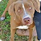 Adopt A Pet :: Della