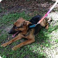 Adopt A Pet :: Bourbon - Houston, TX