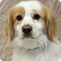 Adopt A Pet :: Shaggy - Modesto, CA