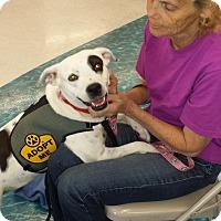 Adopt A Pet :: LeeLee - Phoenix, AZ