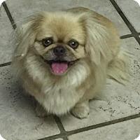 Adopt A Pet :: Gina - Fresno, CA