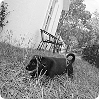 Adopt A Pet :: Sadie - Weeki Wachee, FL