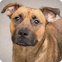 Adopt A Pet :: Jasmine - Westfield, NY