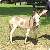 Adopt A Pet :: Bob - West Grove, PA