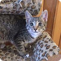 Adopt A Pet :: Meredith - Davison, MI