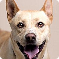 Shepherd (Unknown Type) Mix Dog for adoption in Pt. Richmond, California - DOMINO
