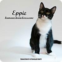 Domestic Shorthair Kitten for adoption in Modesto, California - Eppie