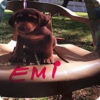 Adopt A Pet :: Emi - Hohenwald, TN