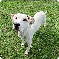Adopt A Pet :: Spencer - Barnegat, NJ