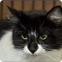 Adopt A Pet :: Moriya - Smithers, BC